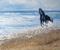 cheval noir court sur rivage mer et sable